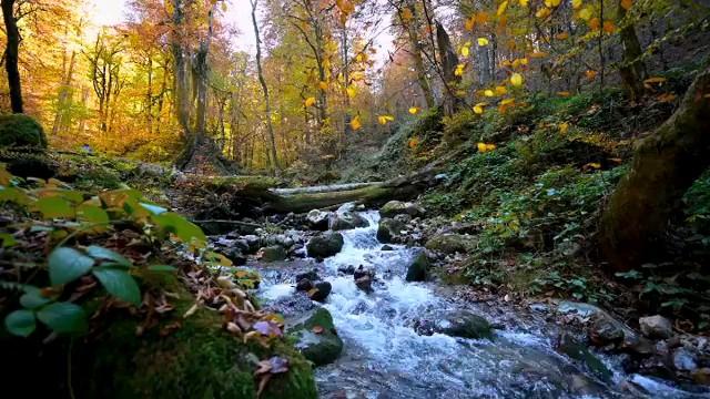 فیلم جنگل زیبای راش در سوادکوه مازندران
