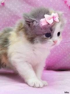 بچه گربه نازنازی