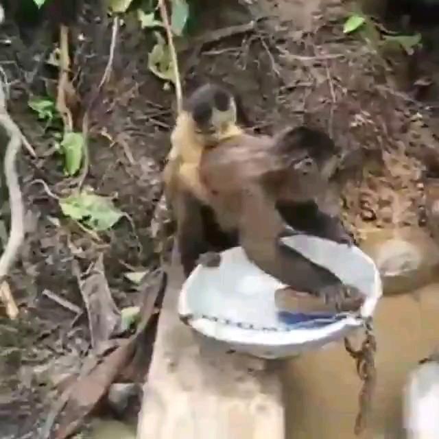 کلیپ خنده دار میمون