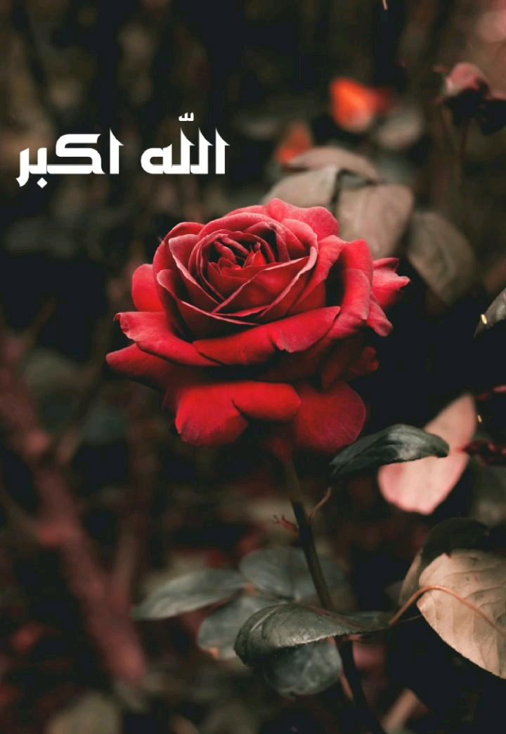 عکس متحرک الله اکبر