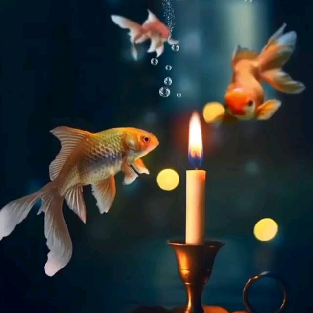 تصویر متحرک ماهی قرمز و شمع