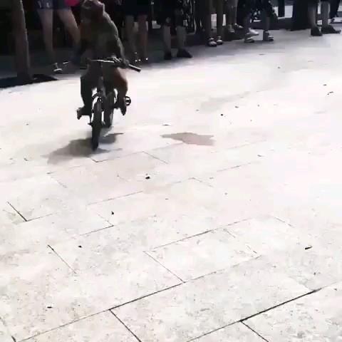 کلیپ اتفاق خنده دار میمون دوچرخه سوار :))