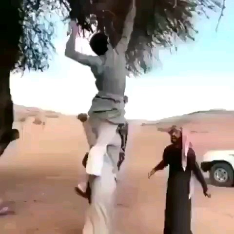 نحوه صحیح کندن شاخه درخت :)))