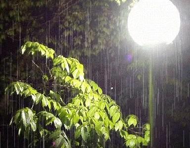 یک شب بارانی