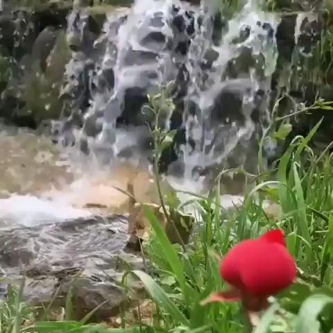 طبیعت جمهوری خودمختار کریمه | ویدیو