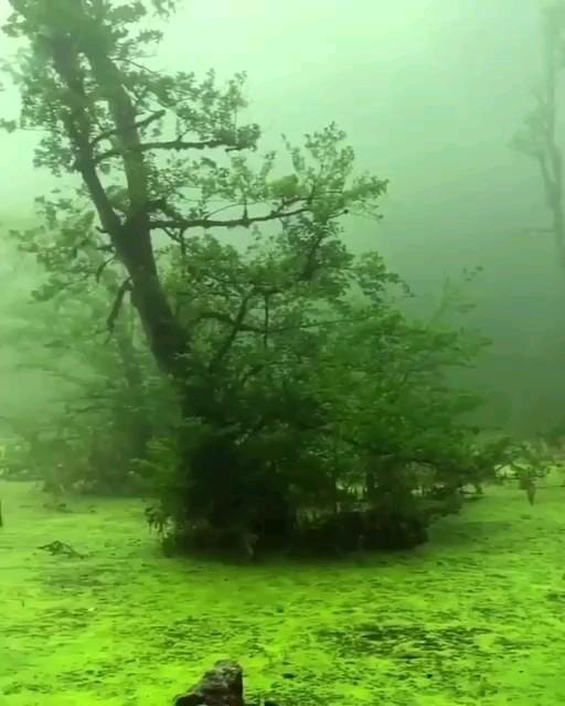 فیلم مرداب اسرارآمیز دَریوک