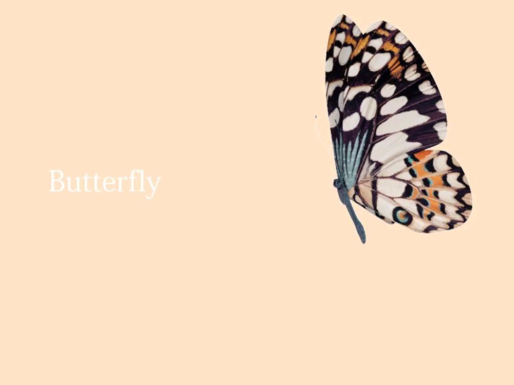 عکس متحرک پروانه
