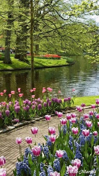 گیف باغ زیبا