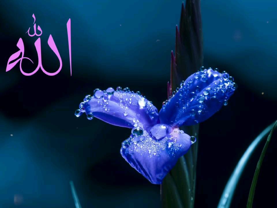 کارت پستال دیجیتال الله