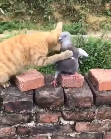 بغل کردن و عشق بازی جالب گربه با کبوتر