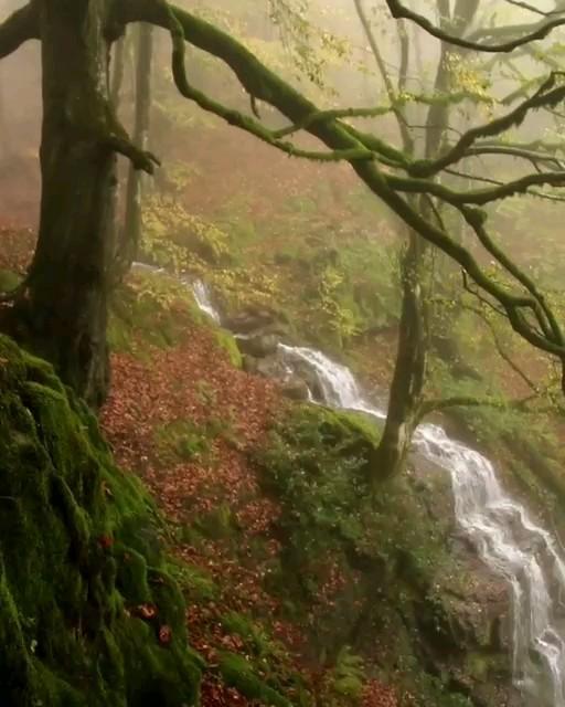 طبیعت زیبای املش