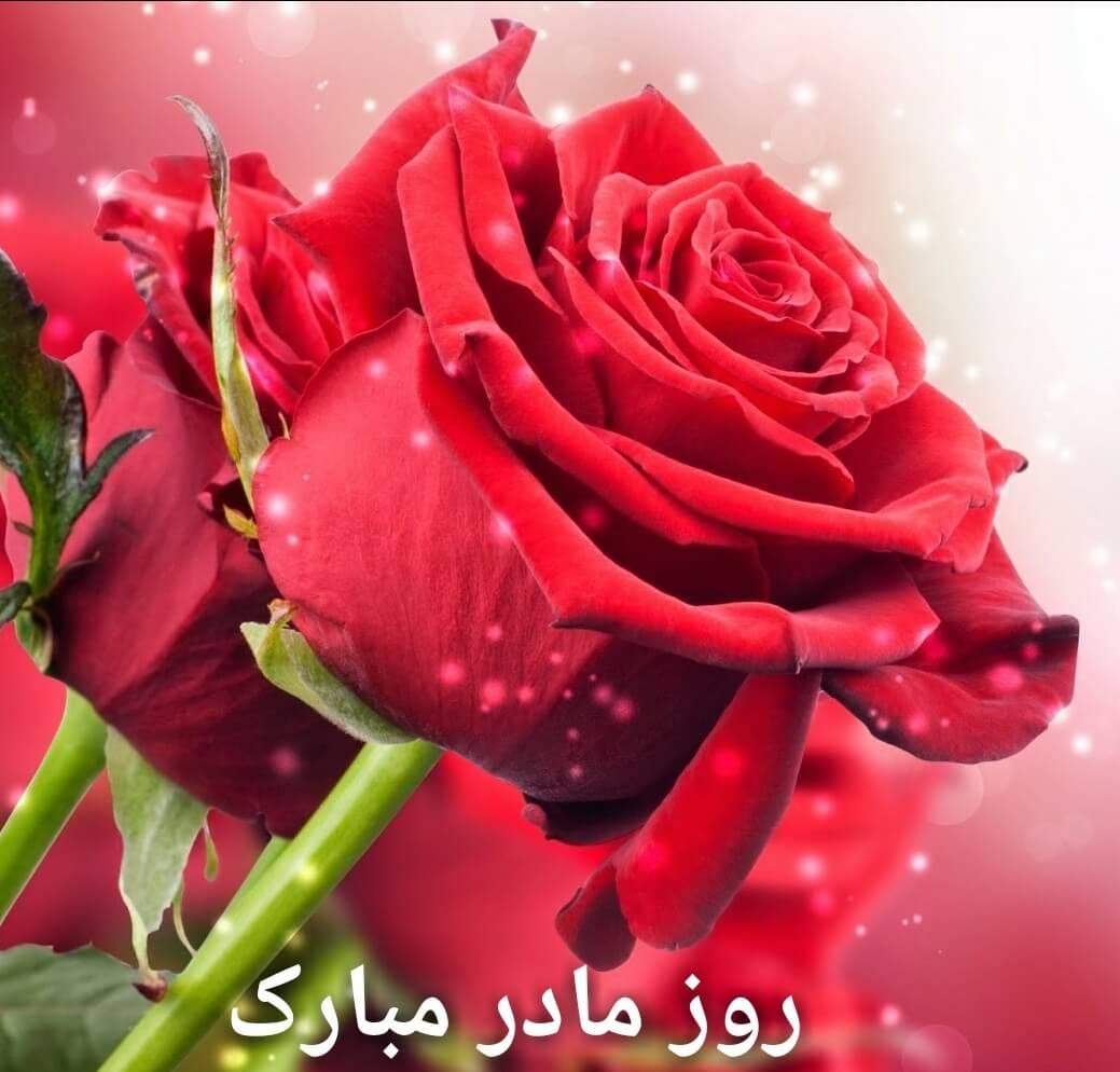 تصویر متحرک مادر روزت مبارک