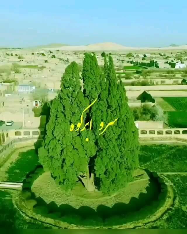 فیلم کهن ترین موجود زنده ایران | سرو ابرکوه یزد