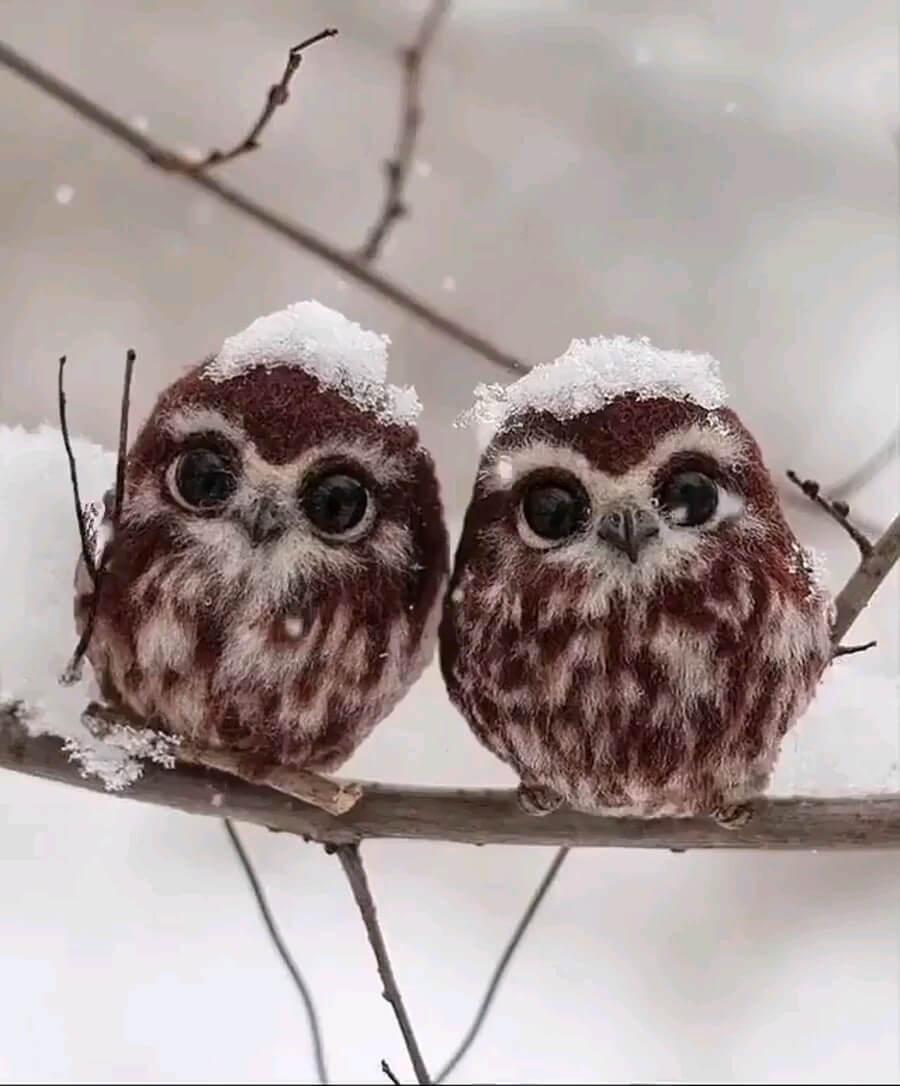 استیکر جغدهای بامزه در برف
