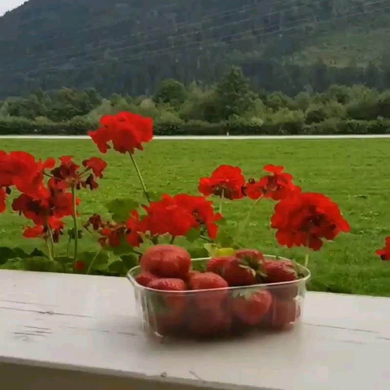 صبح تابستانی بخیر