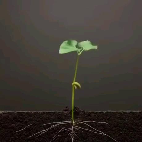 مراحل رشد گیاه از بذر به صورت تصویری | ویدیویی