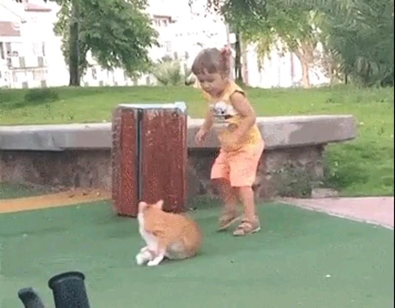 گیف خنده دار دختر و گربه