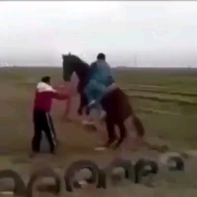 ویدیویی از لگد زدن های خنده دار چهارپایان :))))