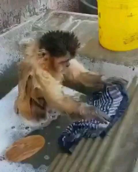 کلیپ طنز میمون خنده دار