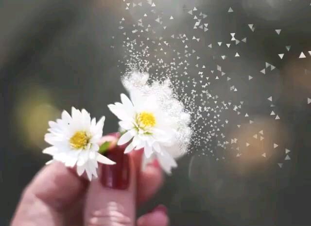 تقدیم گل زیبا