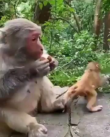 مادر نمونه فقط ایشون | فیلم کوتاه خنده دار و باحال