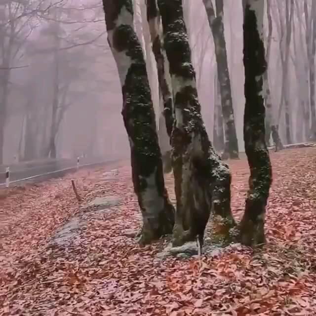 فیلم پاییز سیسنگان مازندران