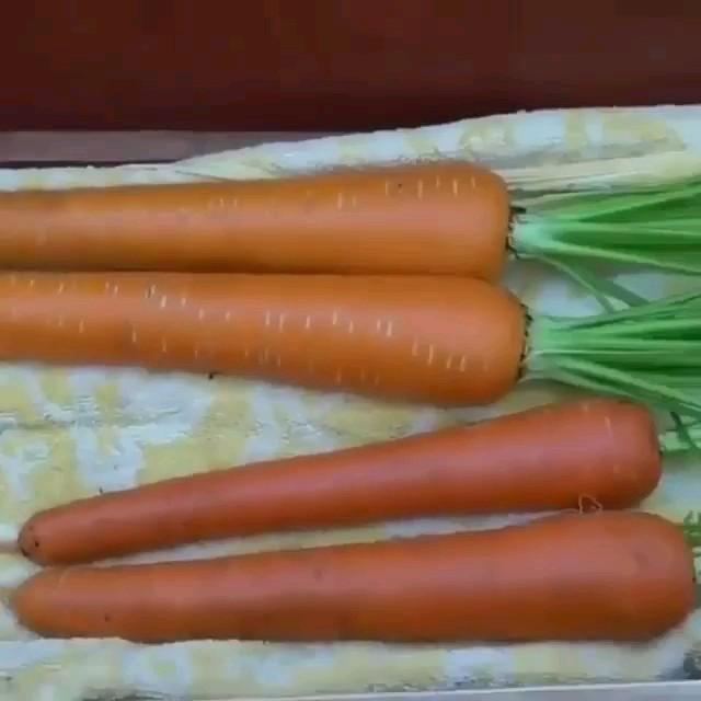 ترفند کاشت هویج در منزل