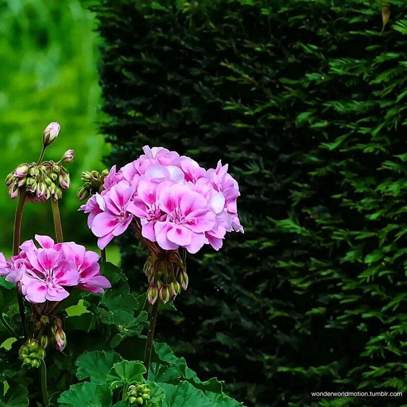 عکس متحرک گل