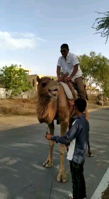 فیلم طنز خنده دار کوتاه شتر سواری :))