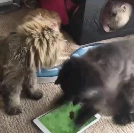 داداش اون واقعی نیست ... میگم ولش کن ...! | طنز گربه های بامزه