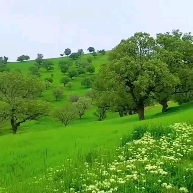 طبیعت زاگرس مرکزی با صدای عرفان طهماسبی