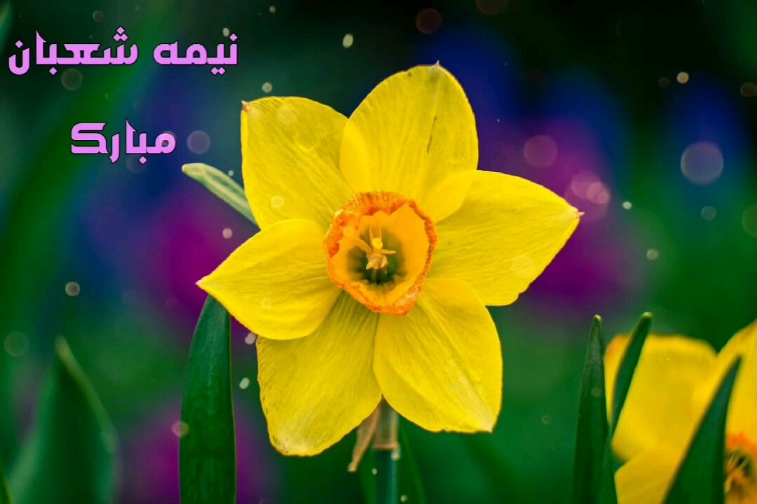 فیلم گلهای جالب و خنده داری که به خاطر اشتباه دروازه بانان به ثمر رسید