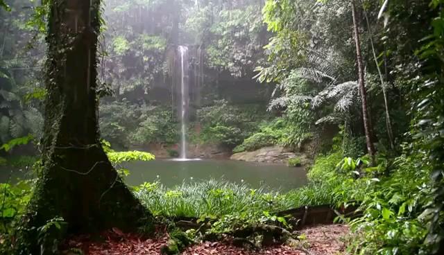باران جنگل بهاری