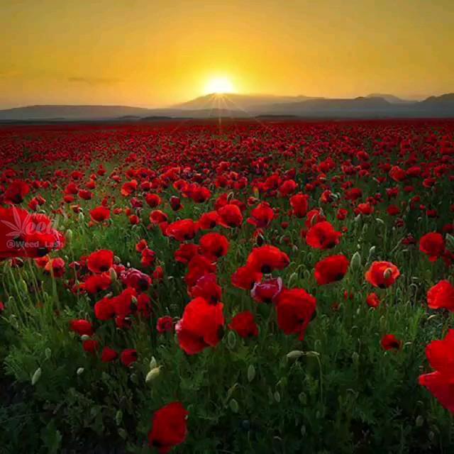 تصاویری زیبا از طبیعت رویایی خوی در ارومیه