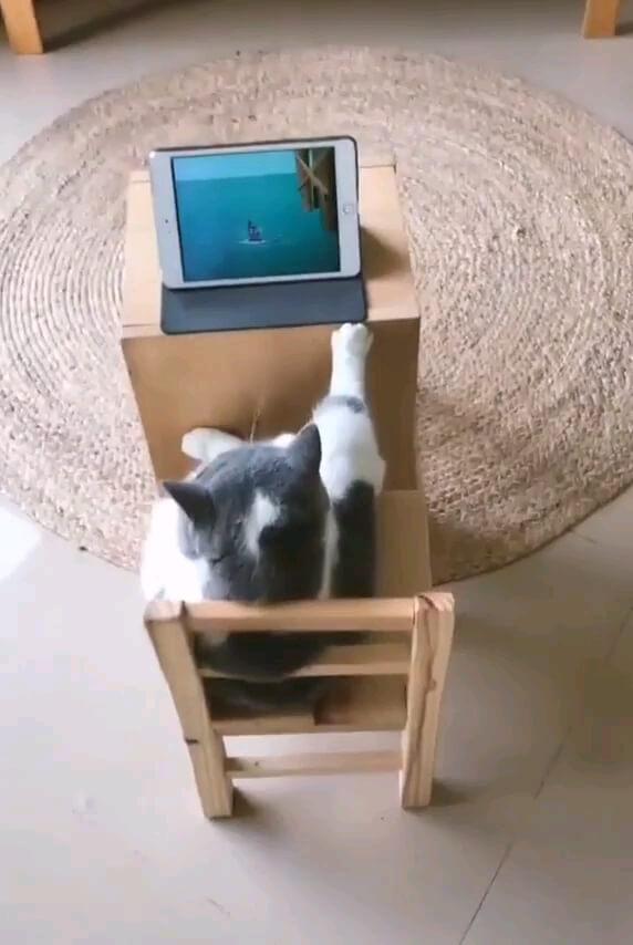 قیافه خنده دار گربه در حین تماشای کارتون تام و جری !