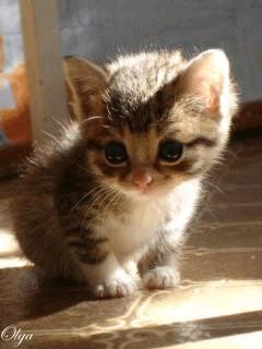 گربه ملوس