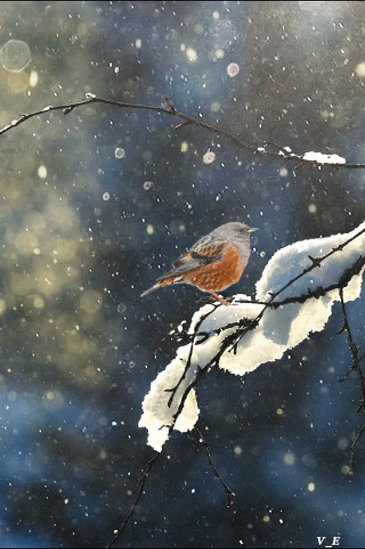 عکس متحرک زیبا زمستانی