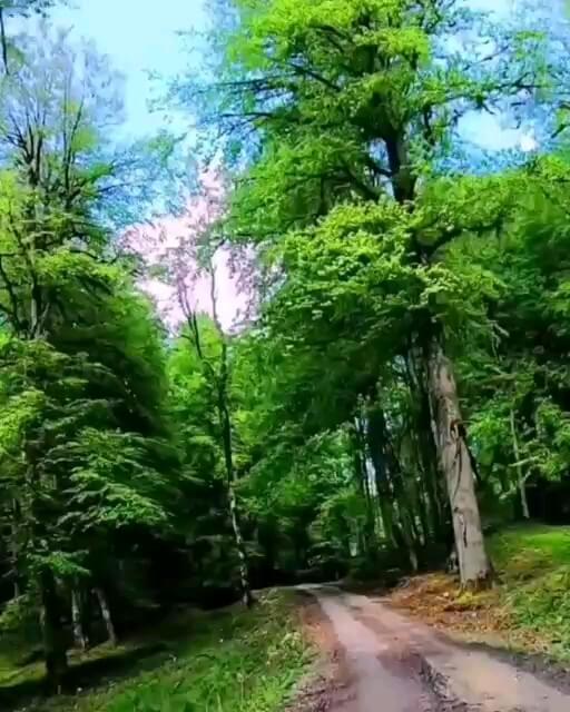 فیلم جنگل تیله کناره مازندران