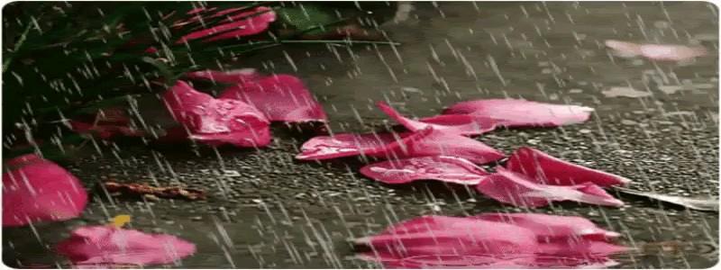 تصویر متحرک زیبا و رمانتیک