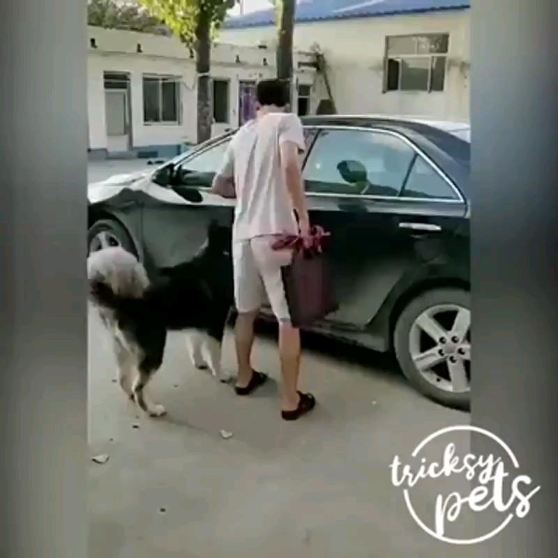 کلیپ باحال از وفاداری خنده دار سگ به صاحبش :)