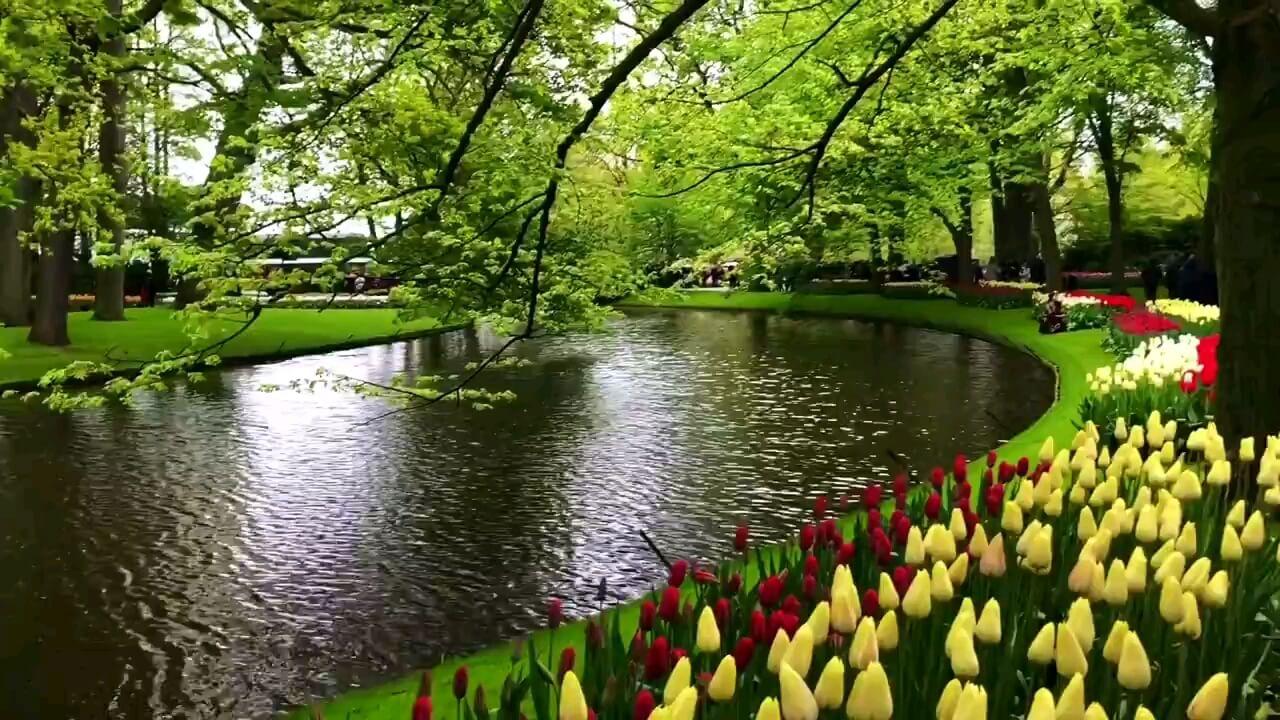 ویدیویی از بزرگترین باغ گل جهان در هلند | پارک زیبای کوکنهوف
