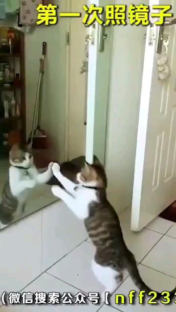 کلیپ خنده دار جدید از واکنش حیوانات مقابل آینه :))