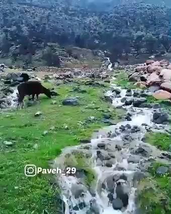 ویدیو طبیعت اورامانات کردستان