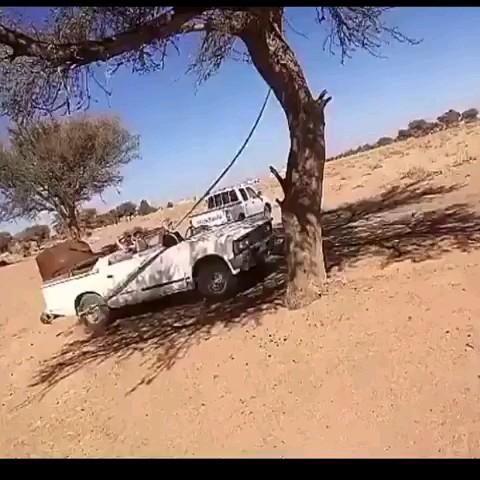 مثلا میخواستن درخت رو از جا بکنن :) فیلم طنز