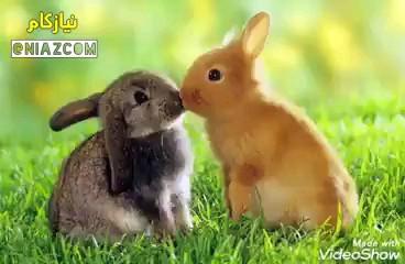 10 عکس برتر از عاشقانه های زیبای حیوانات | love