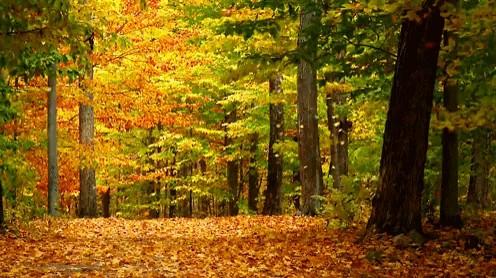 چشم انداز قشنگ پاییزی